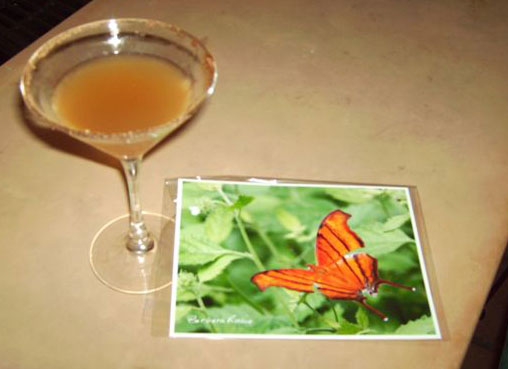 the                         moringa martini - the ruddy daggerwind